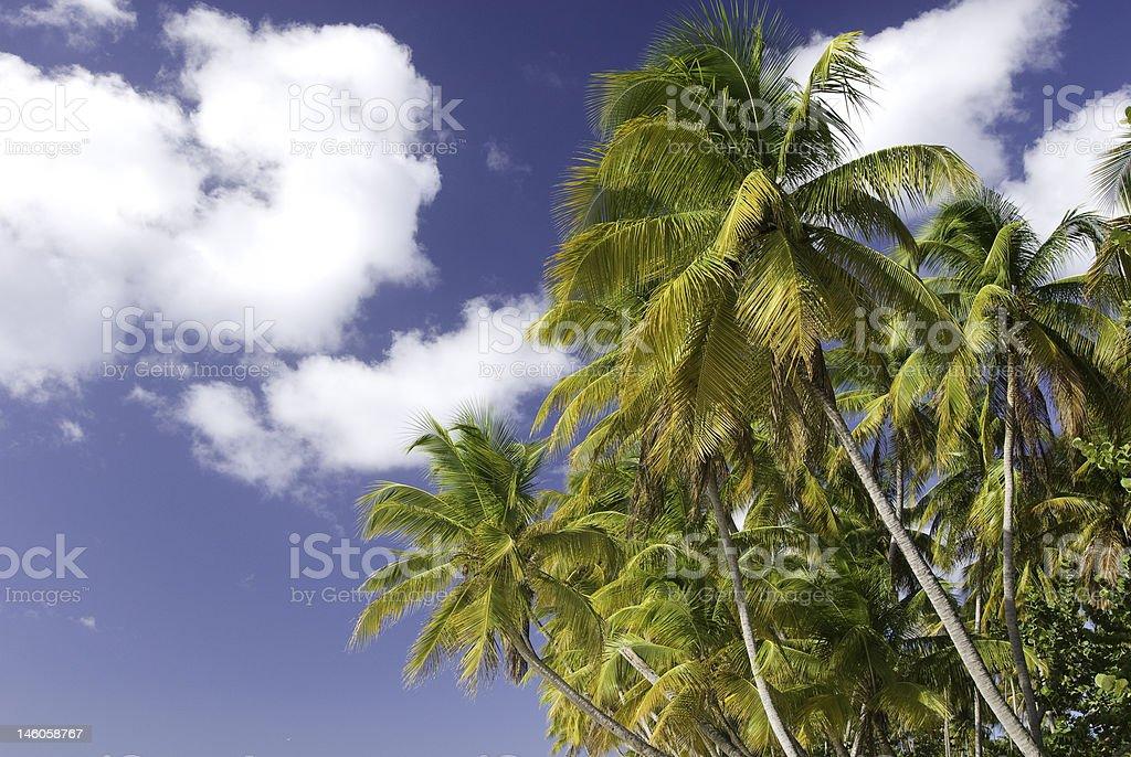 Palm tree foto de stock libre de derechos