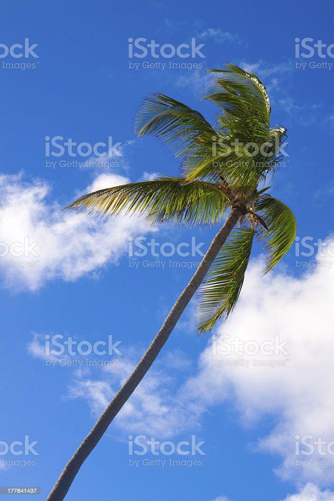 Palm tree. royalty-free stock photo