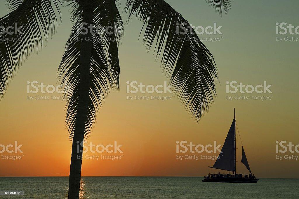 Palm tree # 3 royalty-free stock photo