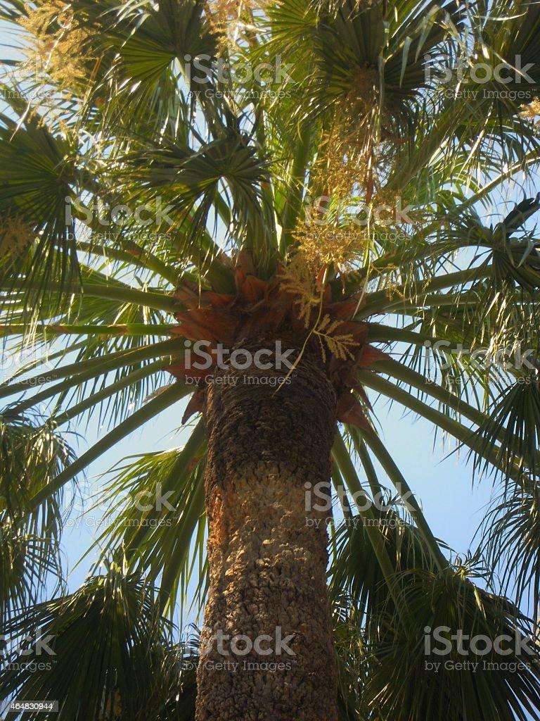 palm tree stock photo