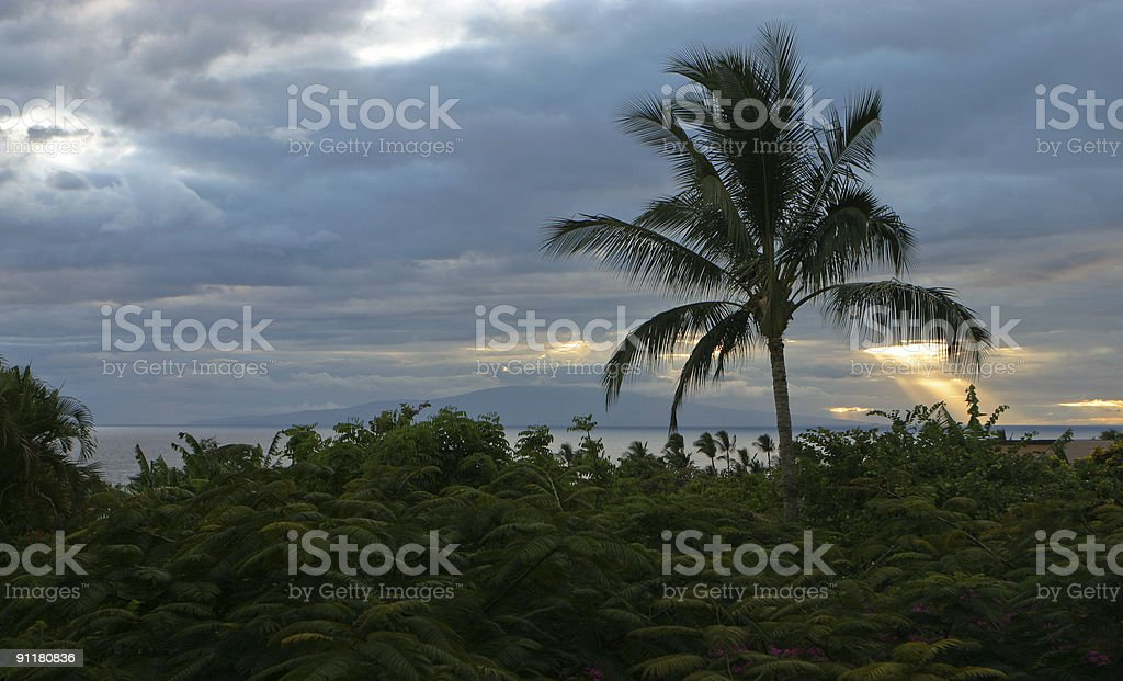 Palm Tree Rays of Light stock photo