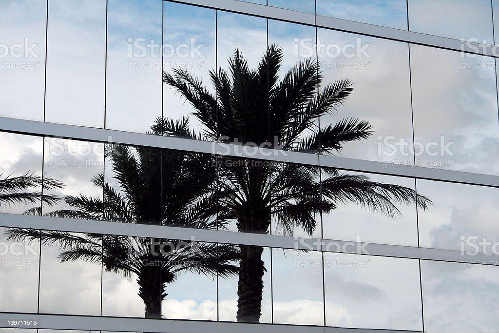 Palm tree reflection stock photo