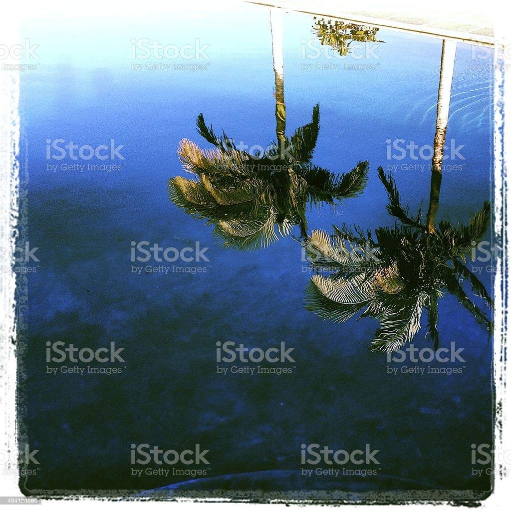 Palm Tree Reflections royalty-free stock photo