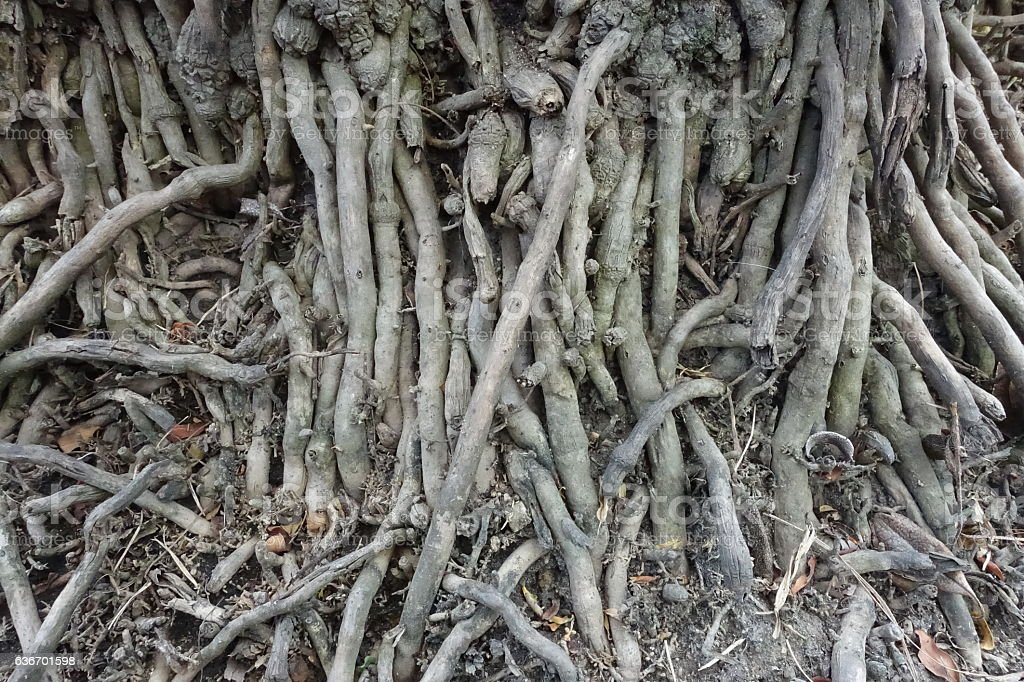 Palm Tree Roots stock photo