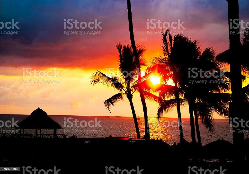 Palm tree sandy beach sunrise stock photo