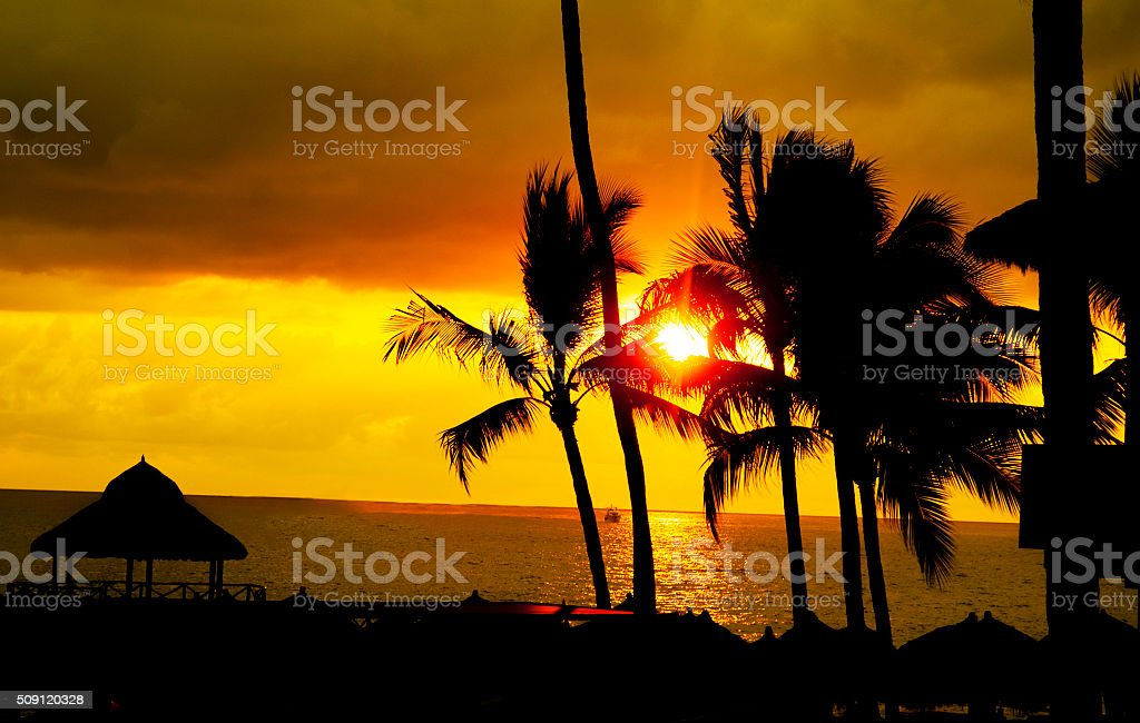 Palm tree sandy beach sunrise stock photo