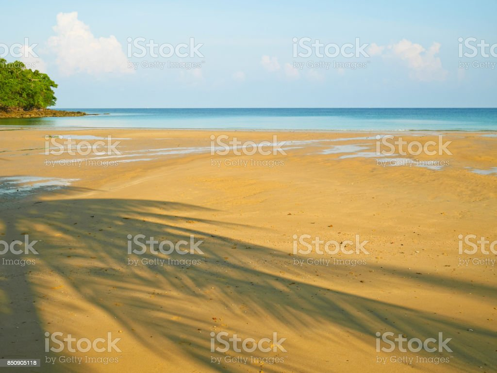 Palm tree shadow on tranquil beach stock photo