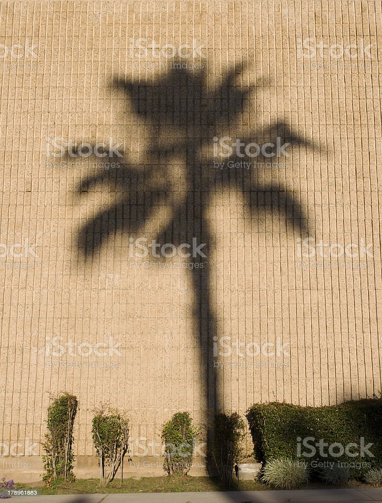 Palm Tree Shadow royalty-free stock photo