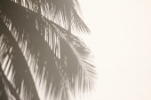 Palm Tree Shadows on White Wall