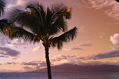 Palm Tree Silhouette against Blue & Yellow Ocean Sunset Sky