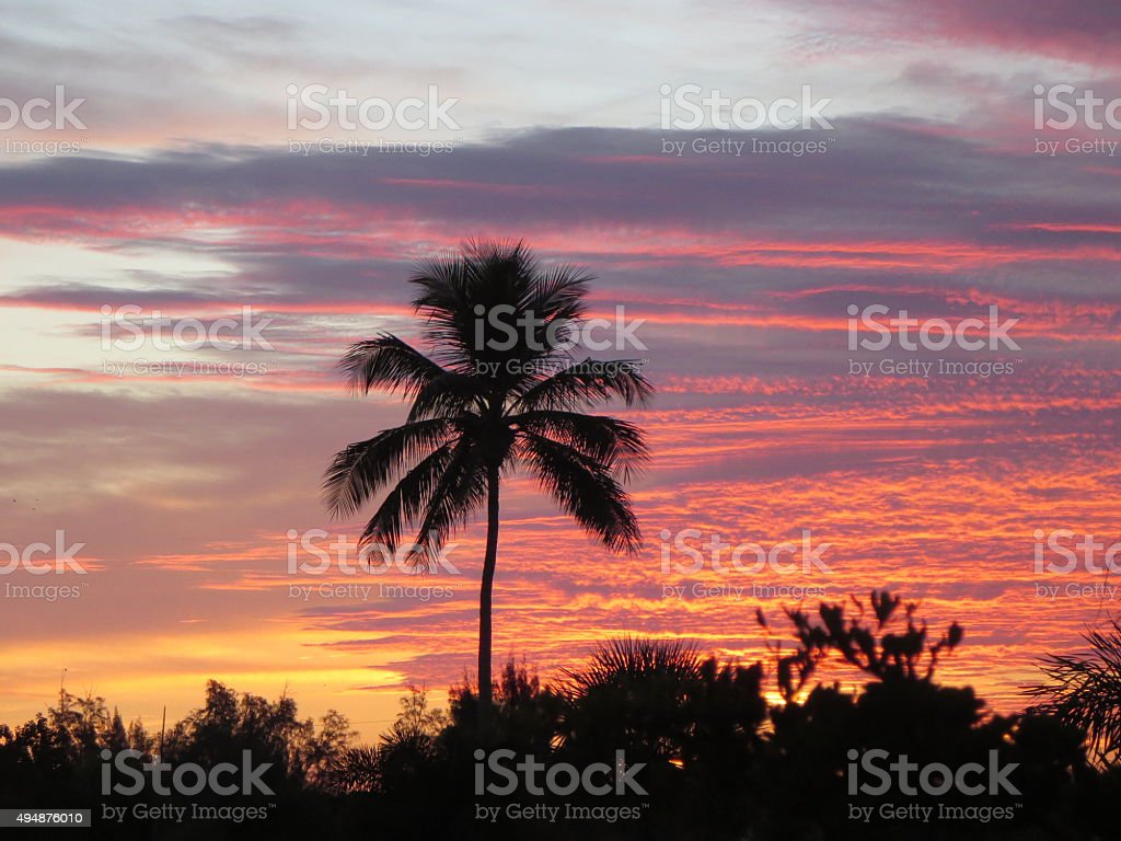 Palm Tree silhouette against sunrise stock photo