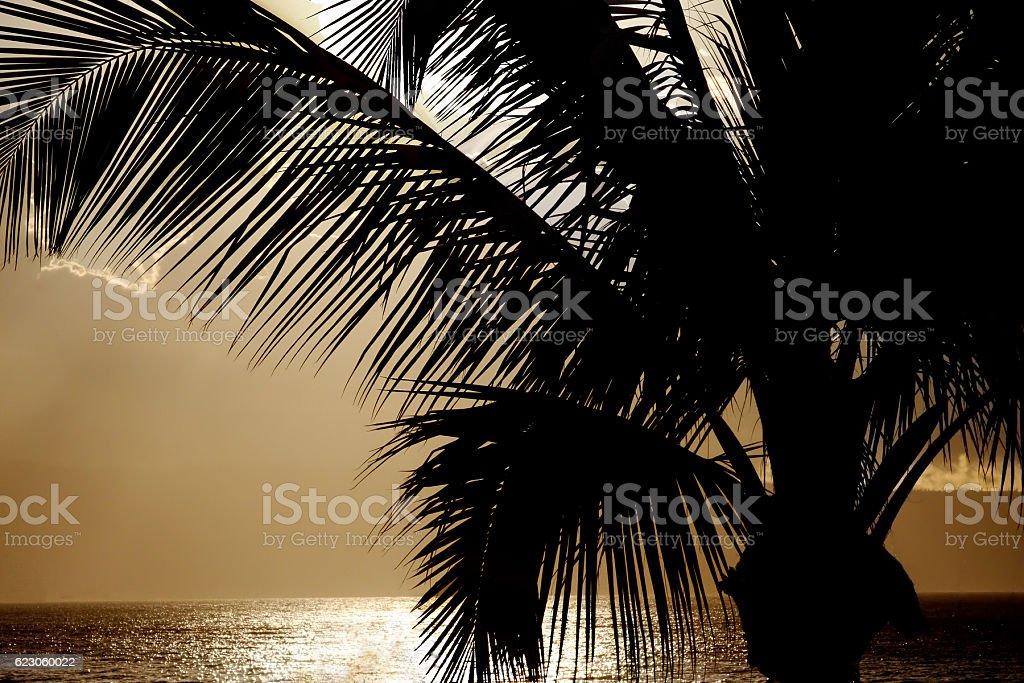 Palm Tree Silhouette at Sunset - Hawaii stock photo