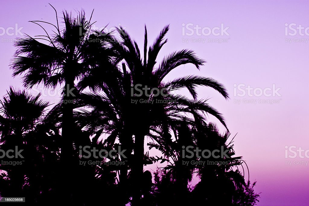 Palm Tree silhouette at sunset royalty-free stock photo