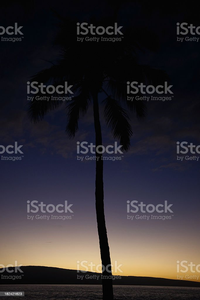 Palm Tree Silhouette Hawaiian Sunset royalty-free stock photo