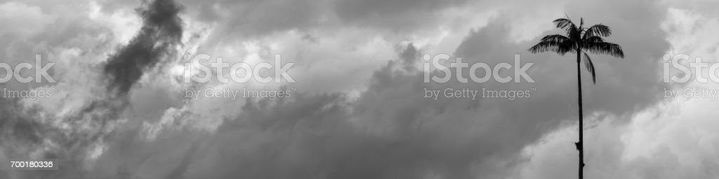 Palm tree silhouette over cloudy sky stock photo