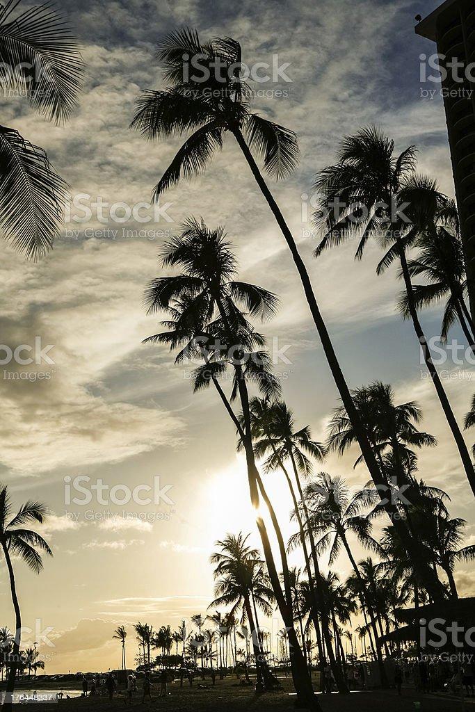 Palm Tree Silhouette royalty-free stock photo