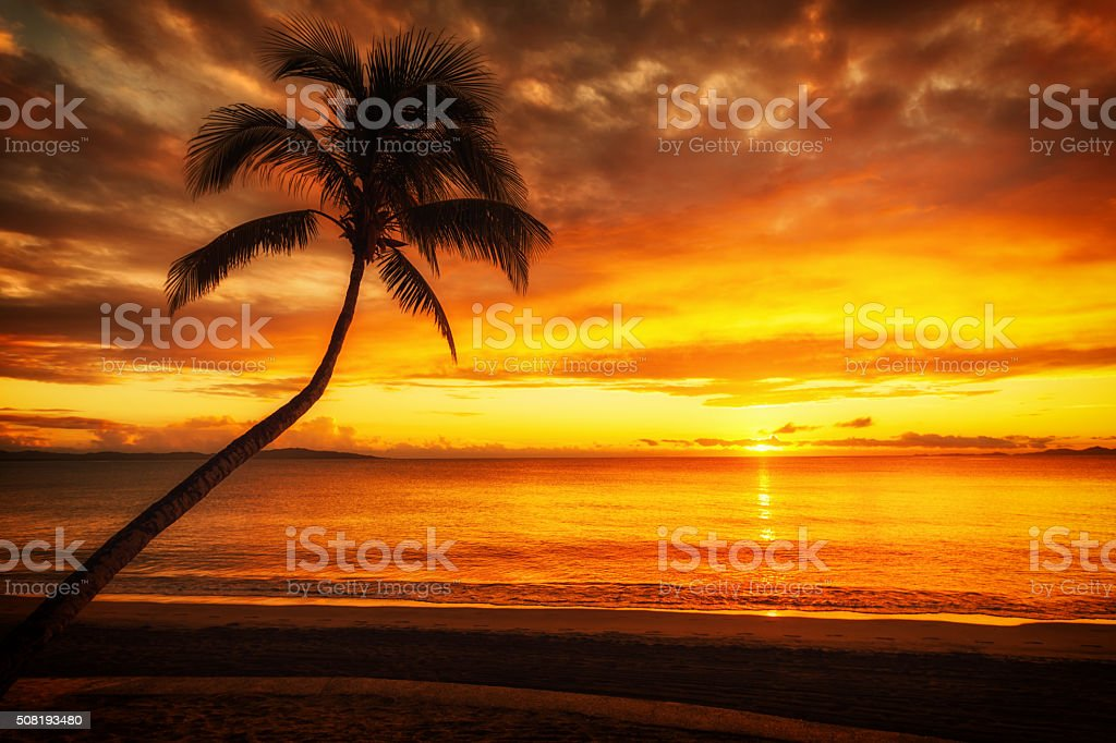 Palm Tree Silhouette stock photo