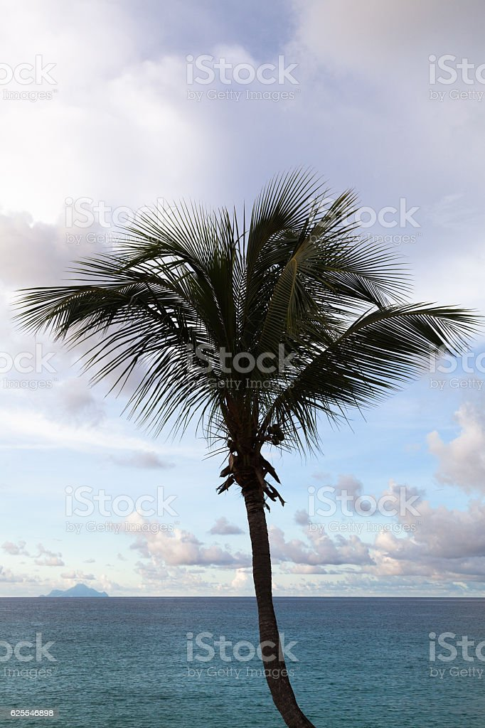 Palm tree silhouette with Saba on the horizon stock photo