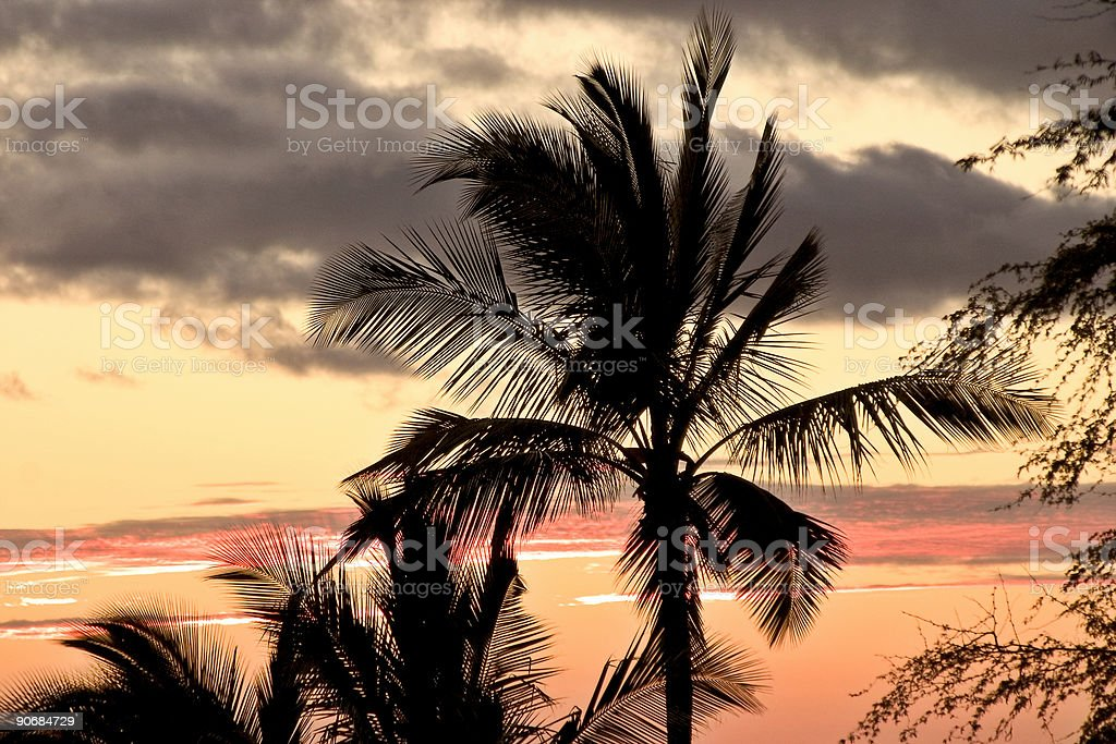 Palm tree silhouetted against a setting tropical sun royalty-free stock photo