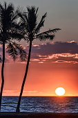 Palm tree silhouettes on tropical island sunset scene