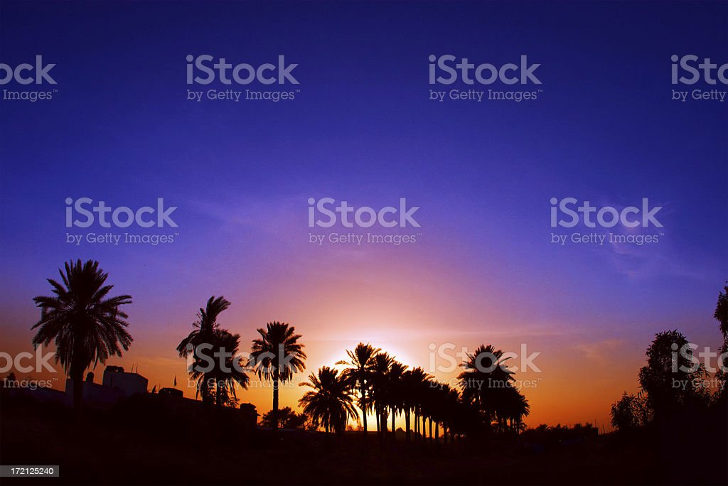 Palm tree silhouettes under a multicolored Iraqi sunset stock photo