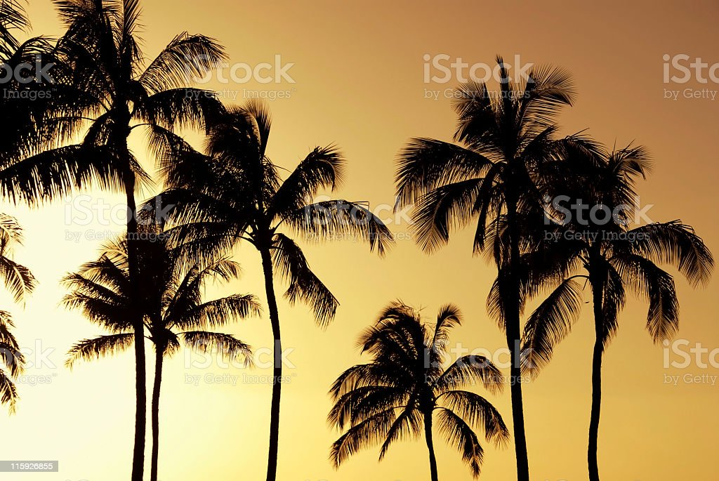 Palm Tree Silhoutte royalty-free stock photo