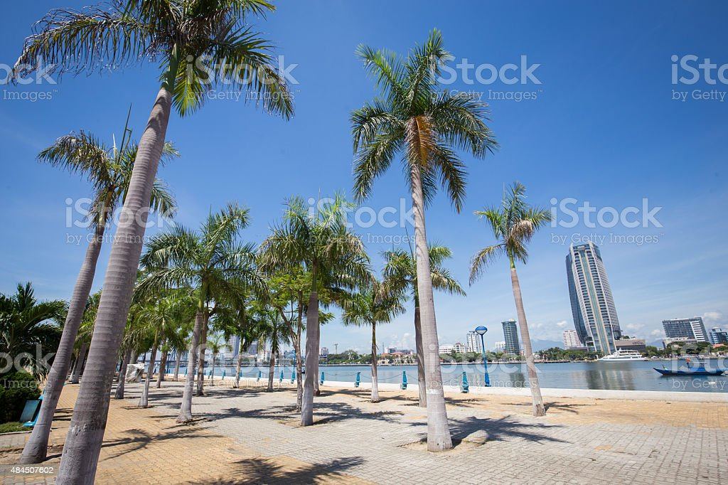 Palm tree street in Da Nang city. royalty-free stock photo