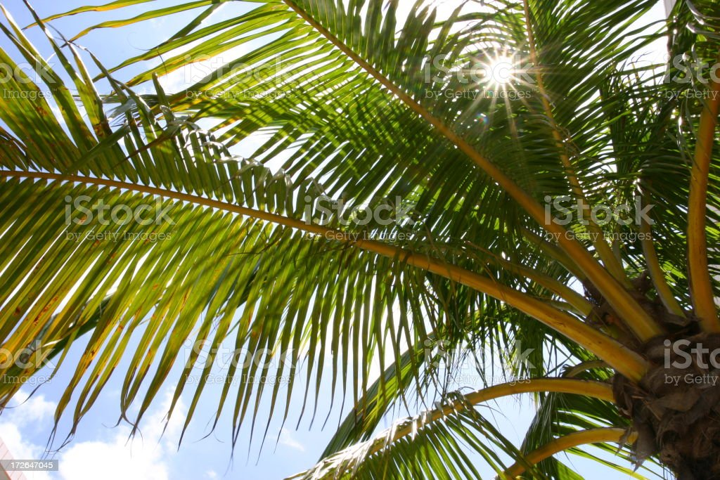 Palm Tree Summer Time royalty-free stock photo