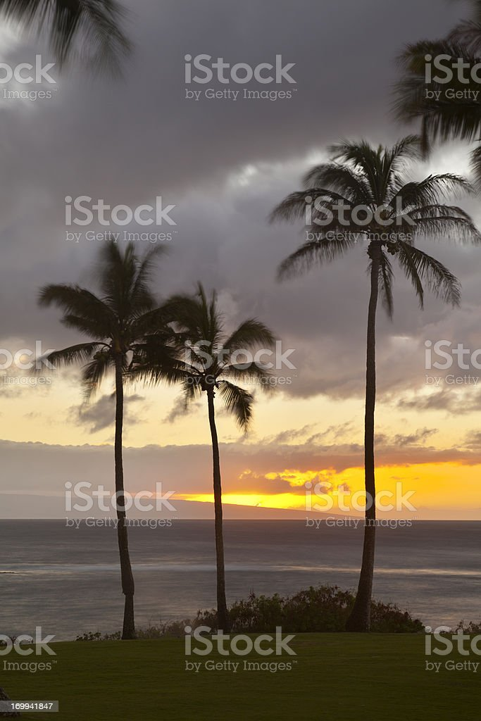 Palm Tree Sunset At Napili Point, Maui royalty-free stock photo
