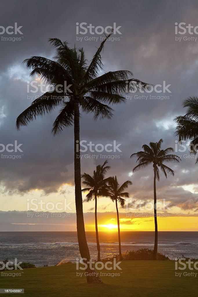 Palm Tree Sunset At Napili Point, Maui stock photo