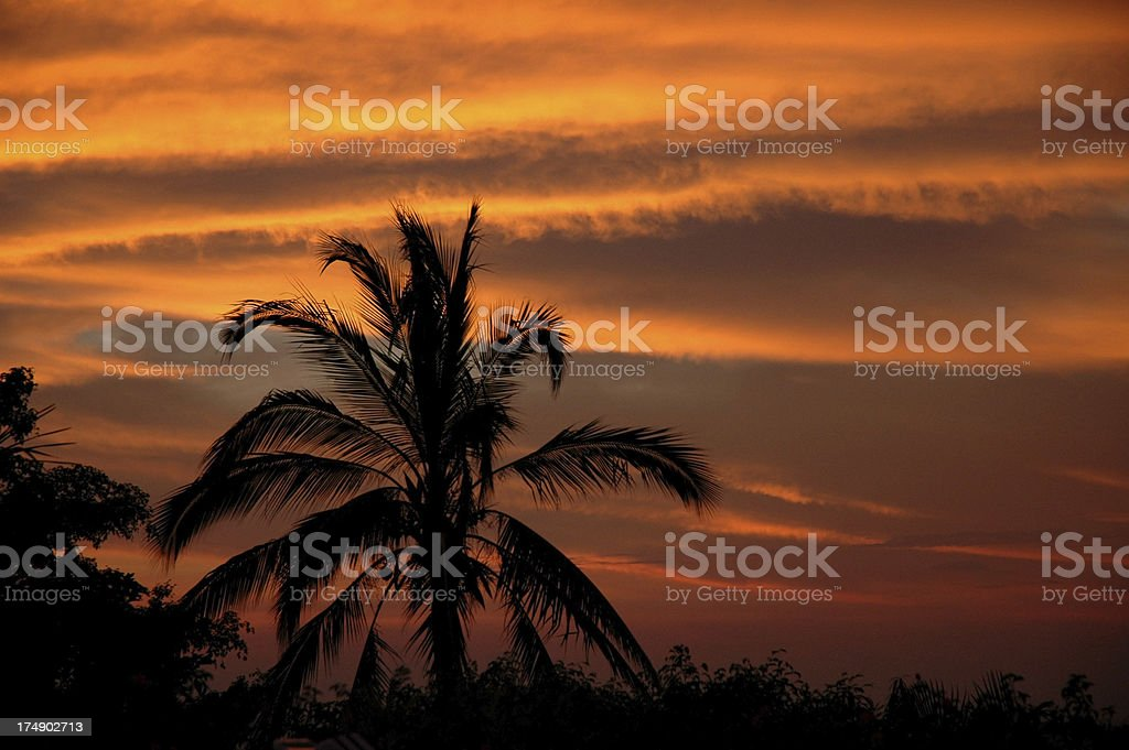 Palm Tree Sunset royalty-free stock photo