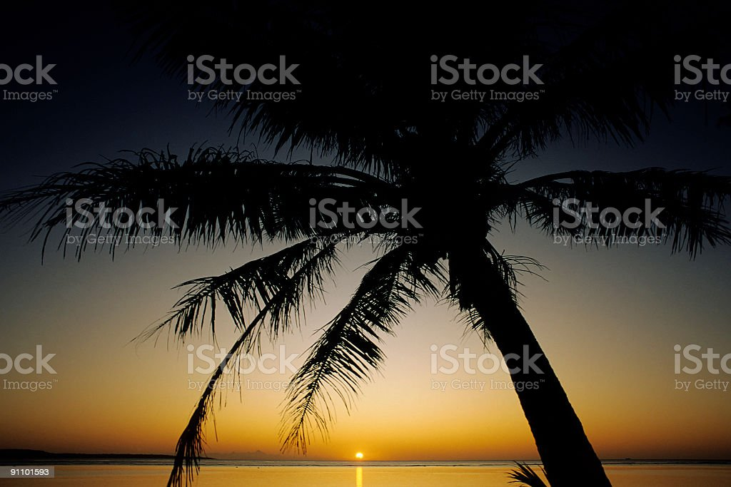 Palm Tree & Sunset royalty-free stock photo