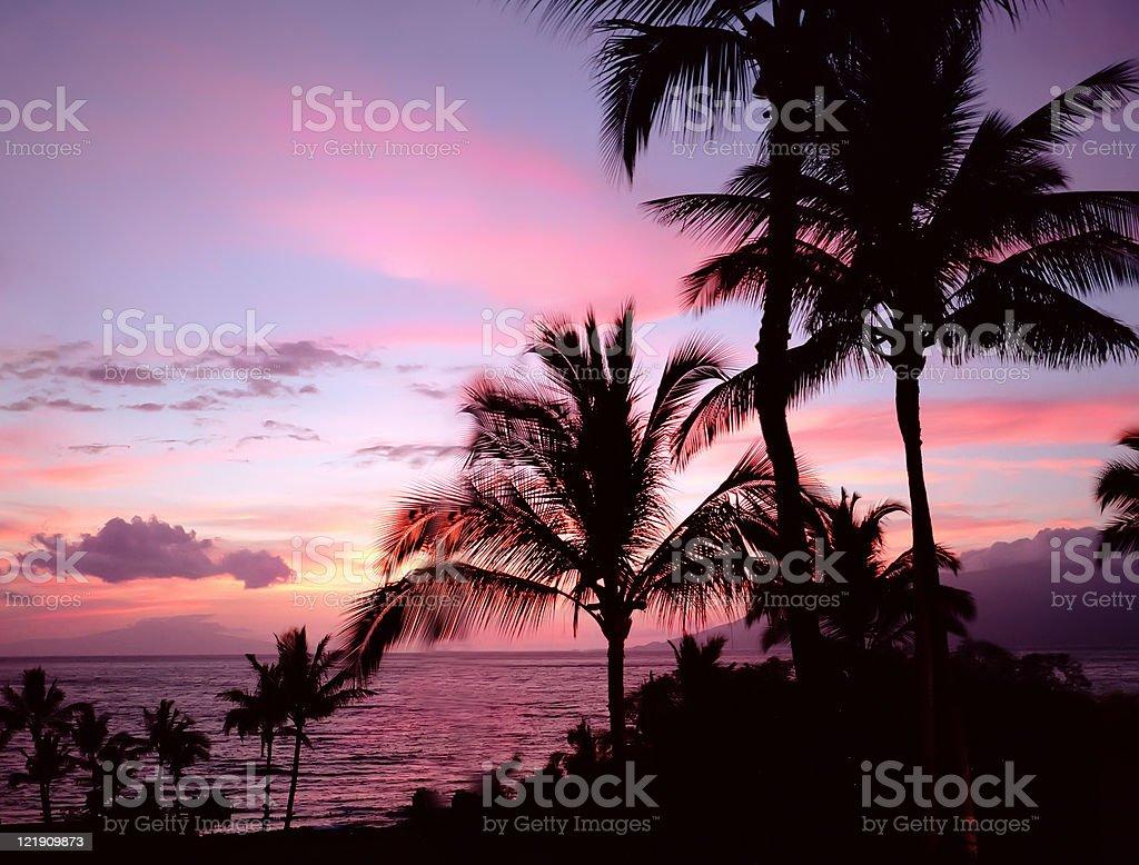 Palm Tree Sunset Silhouette royalty-free stock photo