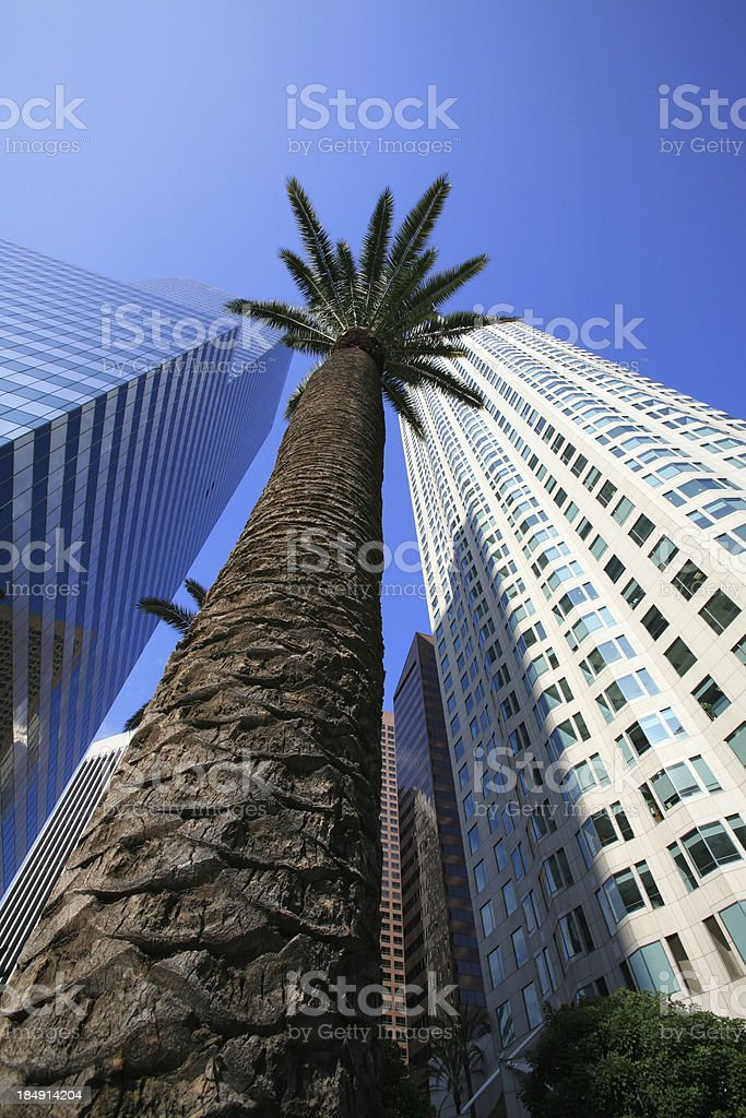 Palm tree taller than skyscrapers stock photo