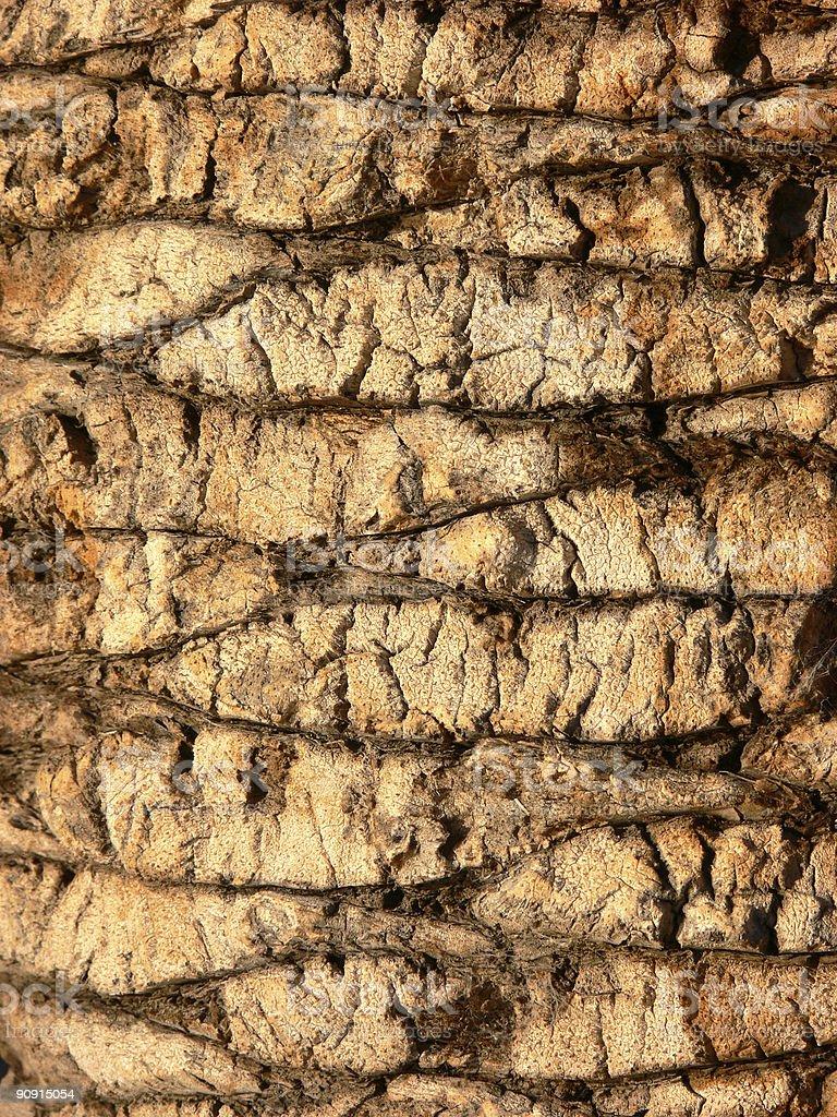 Palm Tree Texture stock photo