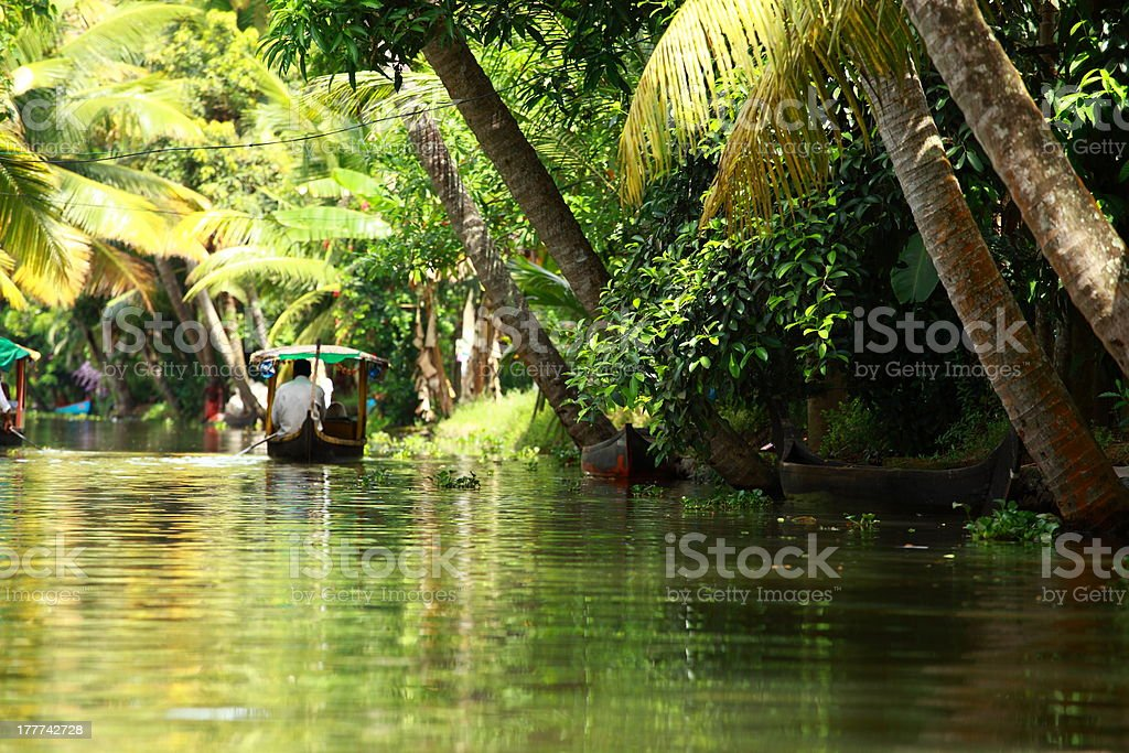 Palm tree tropical forest in backwater of Kochin, Kerala, India stock photo
