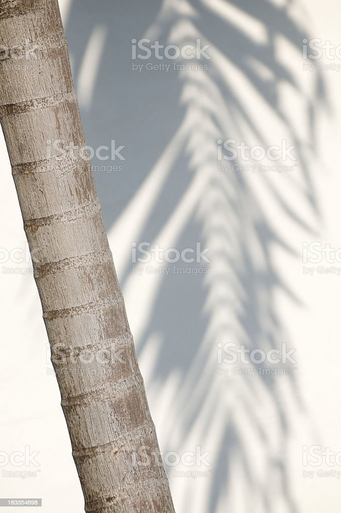 Palm Tree Trunk with Frond Shadow stock photo