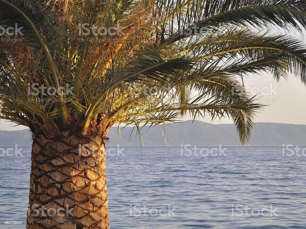 Palmy i Morze Adriatyckie w tle zbiór zdjęć royalty-free