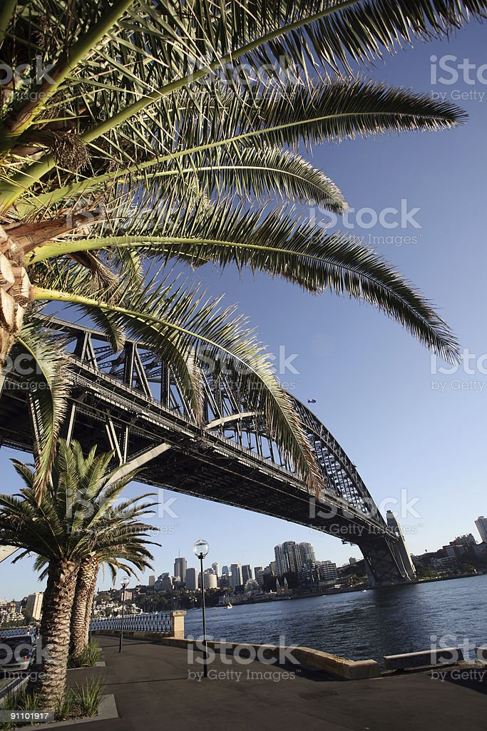 palm tree with bridge royalty-free stock photo