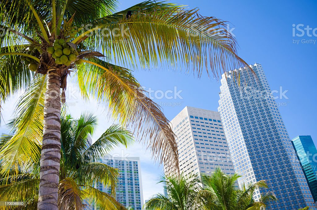 Palm tree with office buildings in Miami, FL stock photo