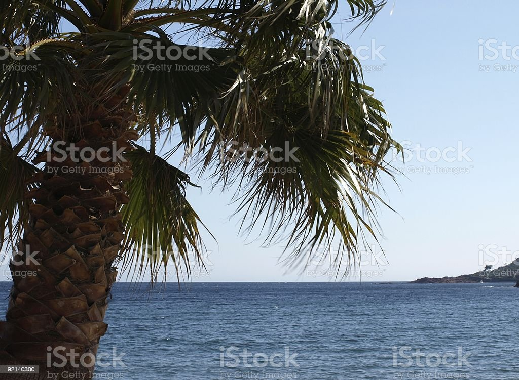 palme on the beach with lots of wind stock photo