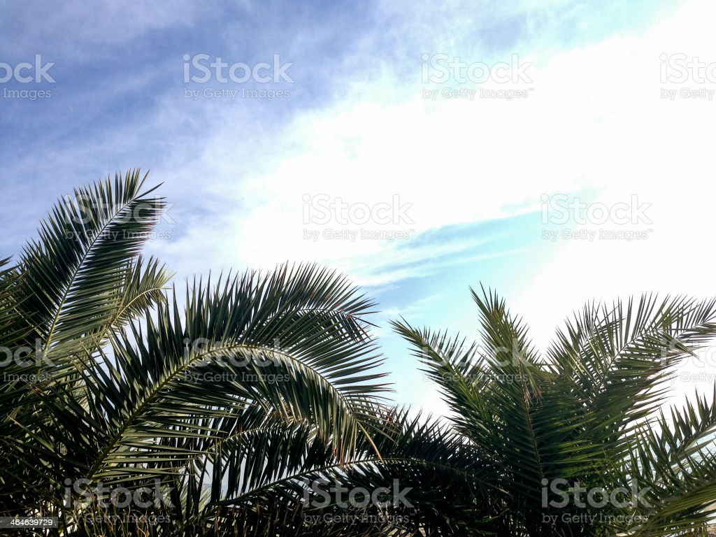 Palm tree with sky background royalty-free stock photo