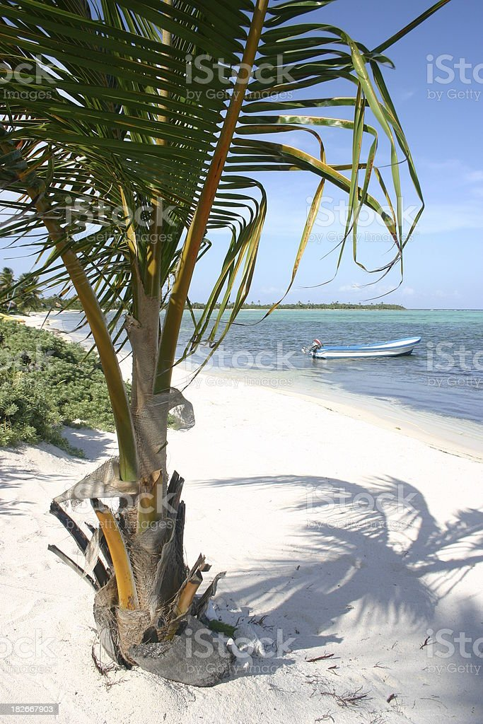 Palm Tree with Small Boat royalty-free stock photo