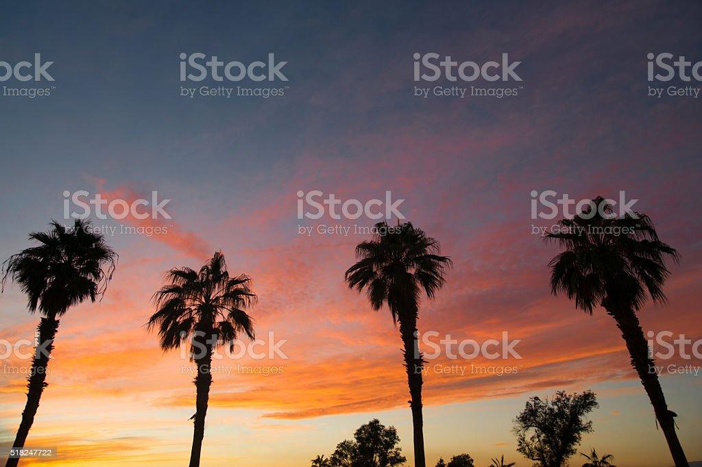 Palm Treee West Coast Tropical California Sunset stock photo