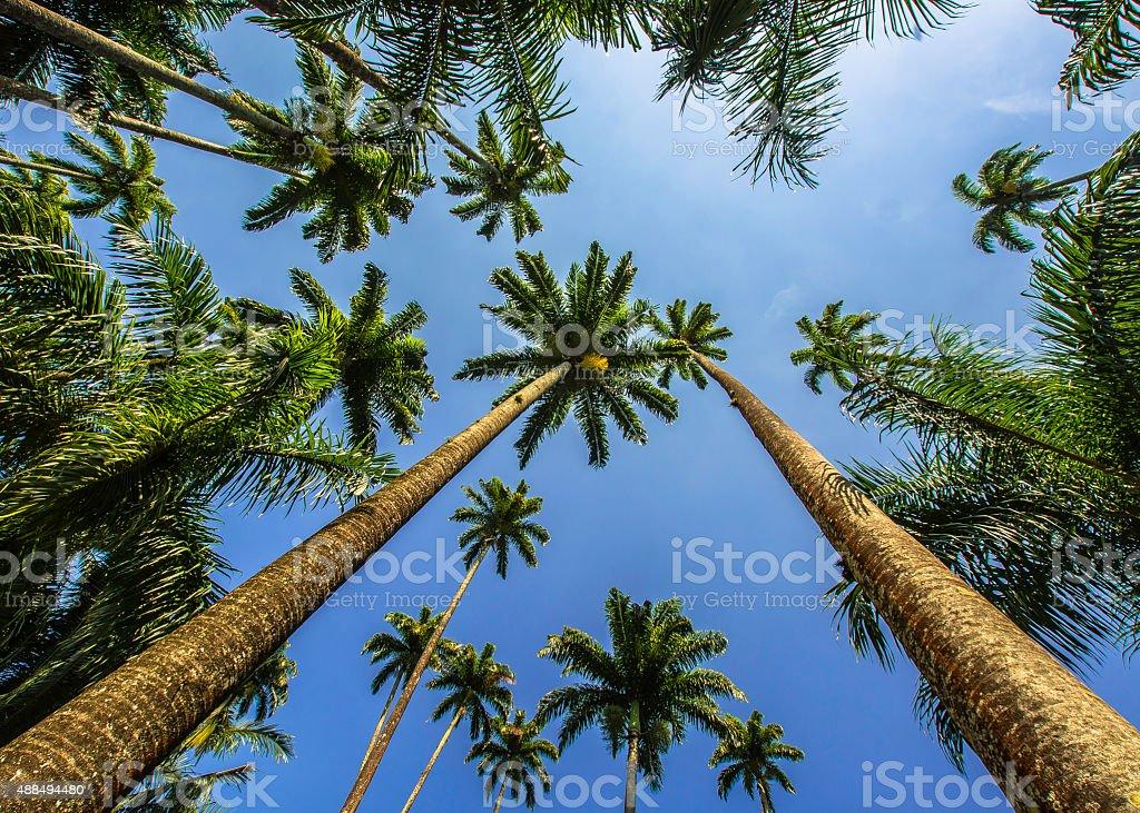 Palm trees 2 stock photo