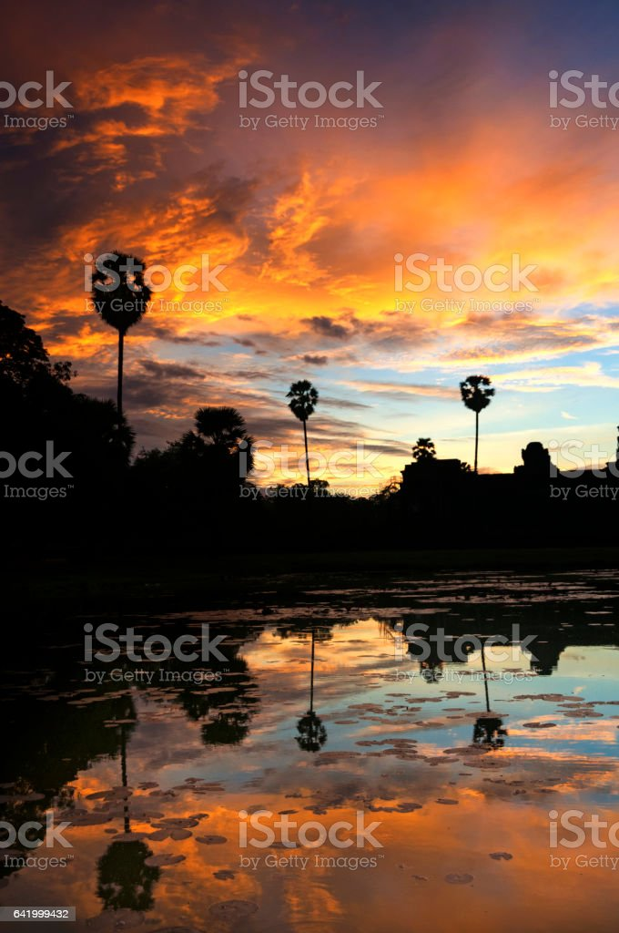 Palm Trees Against An Amazing Sky stock photo