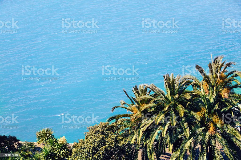 Palm trees against blue sea stock photo