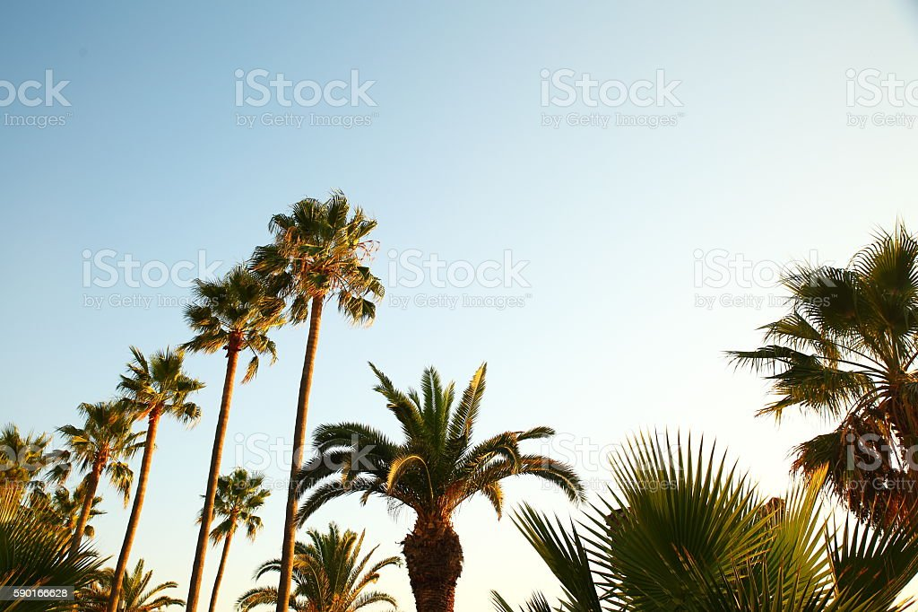 palm trees against sky stock photo