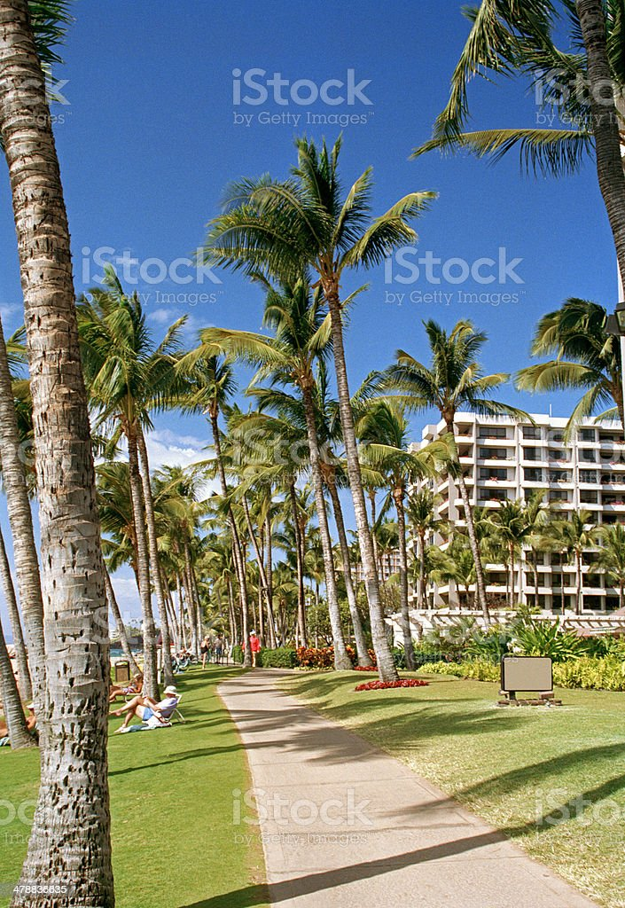 Palm Trees Along Beach Path stock photo
