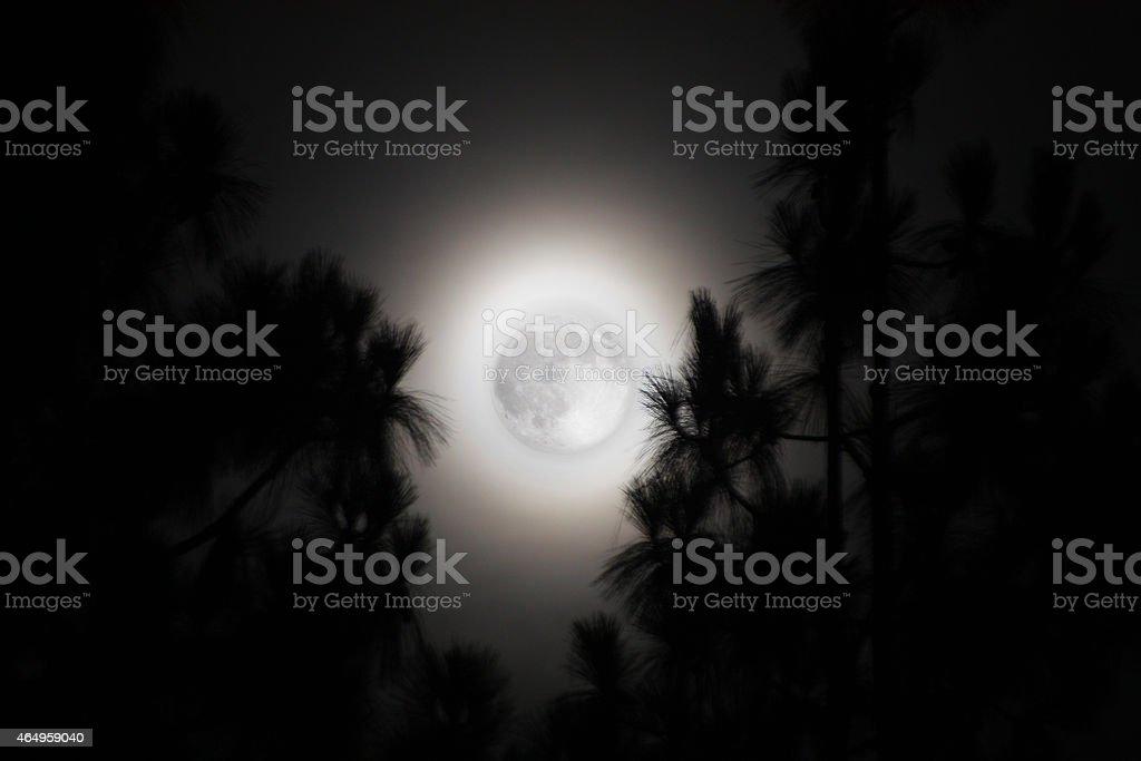 Palm Trees and a Hazy Full Moon in California stock photo